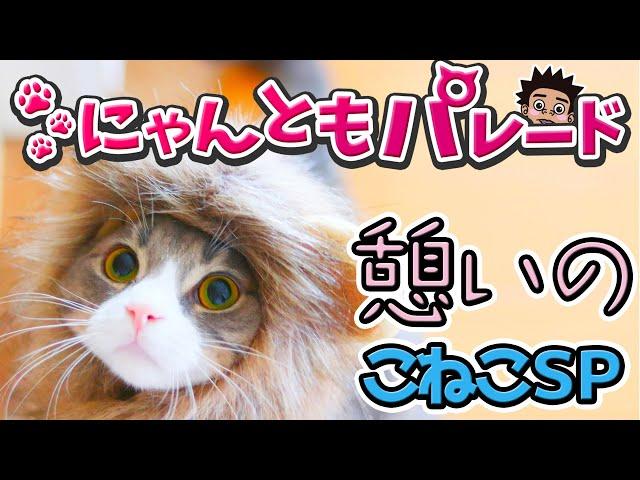 【サンシャイン池崎猫】憩いのこねこスペシャル〜にゃんともパレード〜