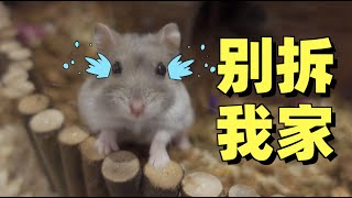 Hamsters stink