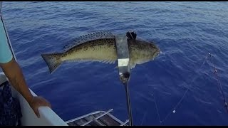 Deep sea fishing mallorca. mediterranean sea (poisonous fish)