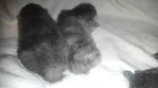 котёнок тацует во сне