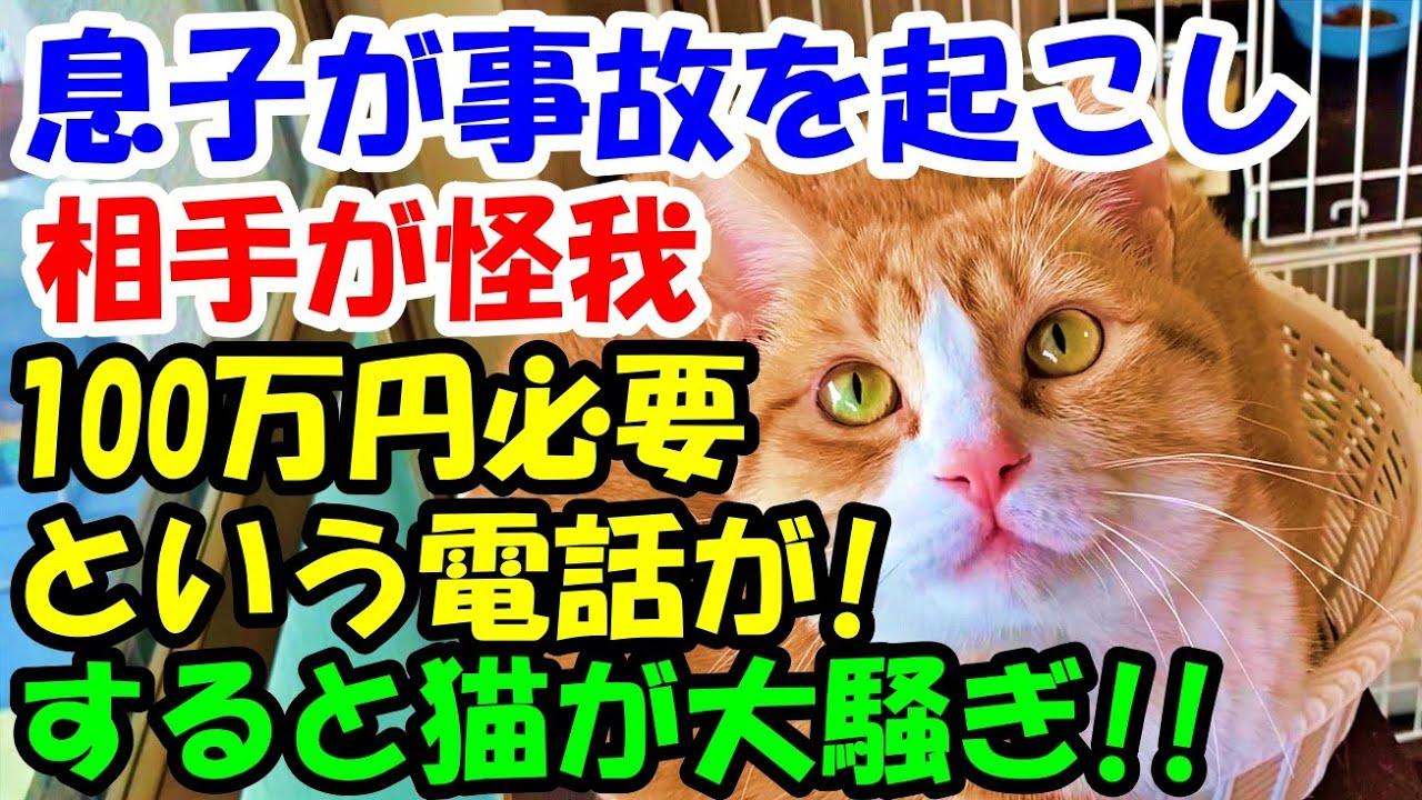 息子が事故を起こし相手が怪我、今すぐ100万円が必要という電話が。その時突然猫が大騒ぎして..【猫の不思議な話】【朗読】