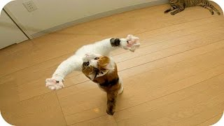 Веселые Кошки 2015! Смешное Видео с Кошками! Funny Cats Video 2015 /