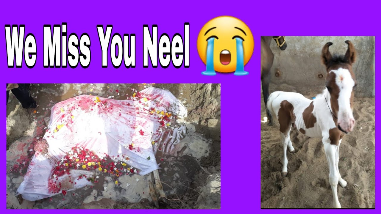 We Miss You Neel Beautiful Baby Horse Death Rip Youtube