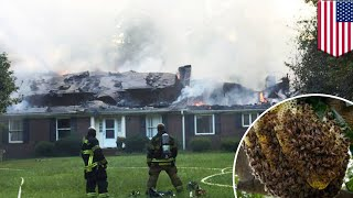 Facepalm  Homeowner tries to get rid of beehive, sets house on fire instead   TomoNews