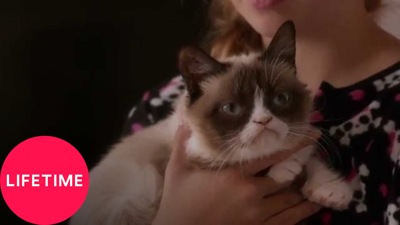 Grumpy Cat's Worst Christmas Ever | Lifetime