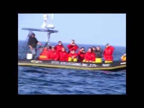 Avvistamento Balena A Tadoussac (Canada)
