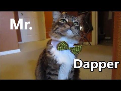 Mr. Dapper 12.14.18 day1997