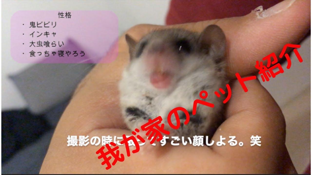 な つく 小動物 動物図鑑 - Yahoo!きっず図鑑