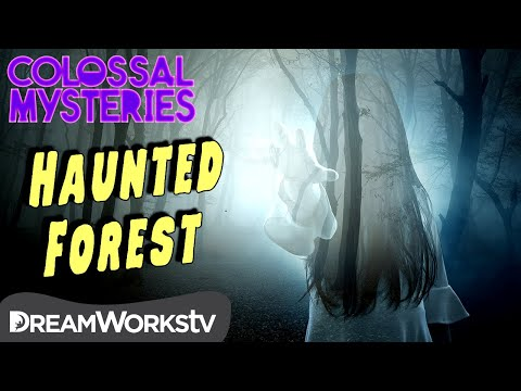 world's-most-haunted-forest-|-colossal-mysteries