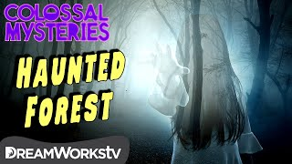 Worlds Most Haunted Forest | COLOSSAL MYSTERIES