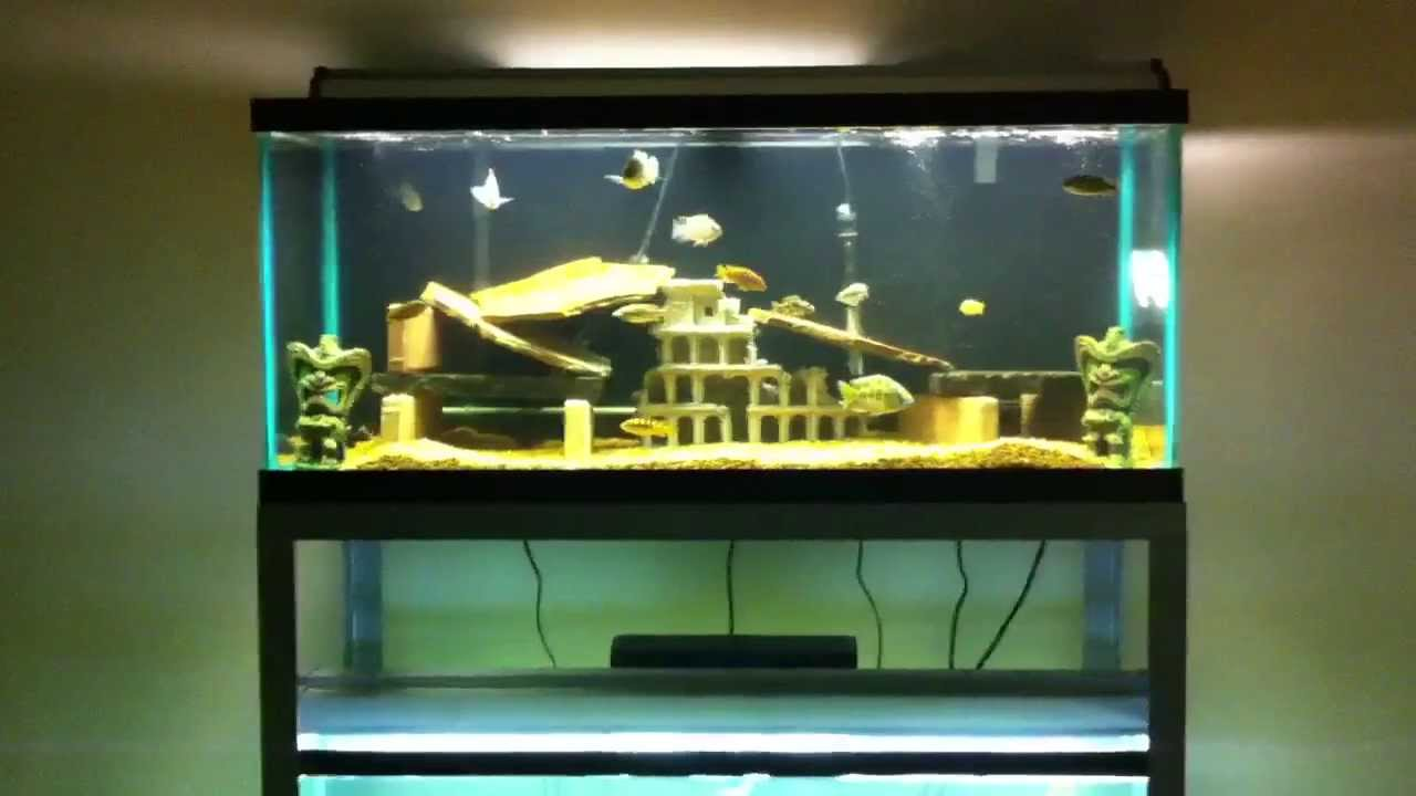 85 gallon aquarium update youtube for 55 gallon aquarium decoration ideas
