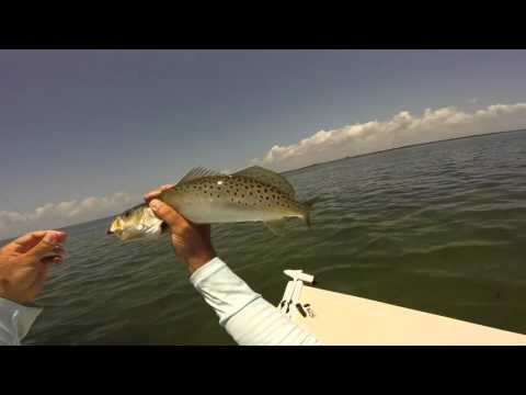 How To Catch Tons Of Charlotte Harbor Spotted Sea Trout