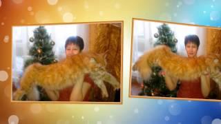 Мой любимый рыжий кот. Песня про рыжего кота. Слайд-шоу