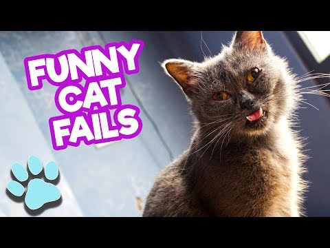 Best Ultimate Funny Cat Fails May 2018 | Funniest Cats Compilation | #thatpetlife