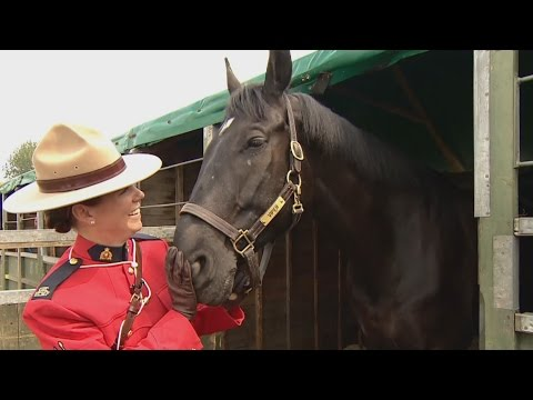 RCMP Musical Ride to perform for the Queen