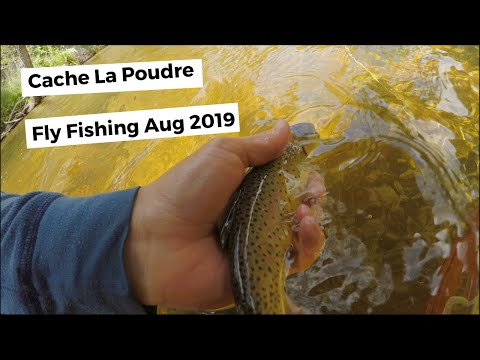 Cache La Poudre River - Big South Trail - Fly Fishing August 2019