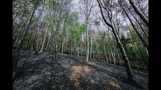 Pożar lasu w Kamionce Małej