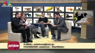 'Pet Show'  20.1.2016  Web exclusive  Ελληνικός Ομιλος Γάτας, Russian blue, Ιερή γάτα Βιρμανίας