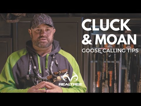 Goose Calling Tip: Perfecting The Goose Cluck and Moan