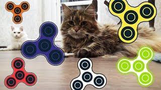 Кошки крутят спиннер, спиннер крутят кошки