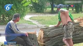 В Кировограде продолжают уничтожать деревья в зеленых зонах