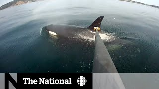 Whale sightings increase near Vancouver's shores