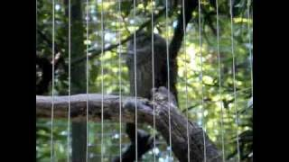 The biggest zoo in the world(Bronx Zoo)