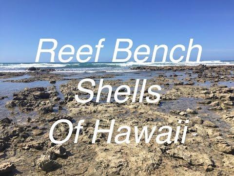 Reef Bench Seashells of Hawaii!