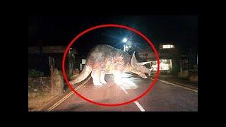 Gerçek Hayatta Kameraya Yakalanan 10 Dinozor