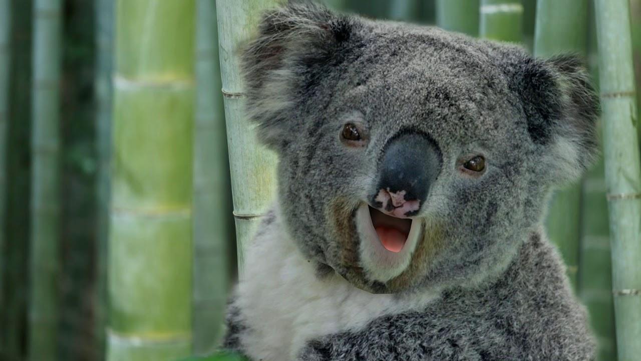 Funny Silly Jokes - Talking Koala Bear, Prairie Dog, Grasshopper