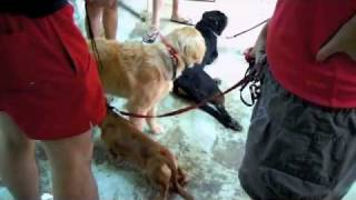 Dog Training By Best Friends Singapore