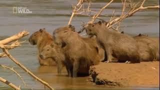 Dzika Amazonia. Film dokumentalny
