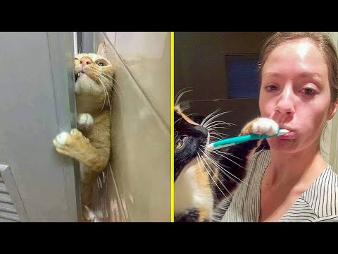 Funny Cats No Privacy