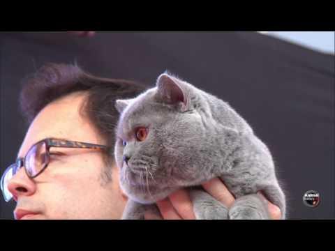 Mediterranean Winner Show 2017 - BIS Cat 3