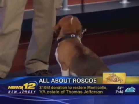 roscoe the bed bug dog demonstrates his skills on news 12-nj's