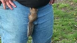 Got Nuts - When Baby Squirrels Attack