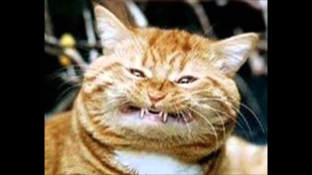 ugliest cats in the world wide world - YouTube
