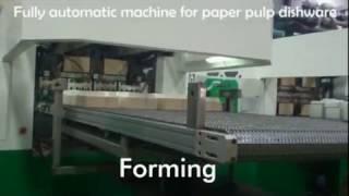 Biodegradable Take Away Food Box Paper Tableware Production Line