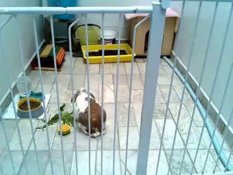 Bunny timelapse - raspivid - avconv/ffmpeg test 01
