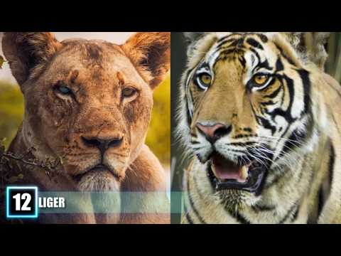 12 Most SHOCKING Real Animal Hybrids!
