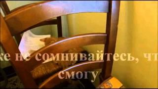 Самый смешной кот (funny kitty of internet)освободивший любимый стул от ненужных вещей
