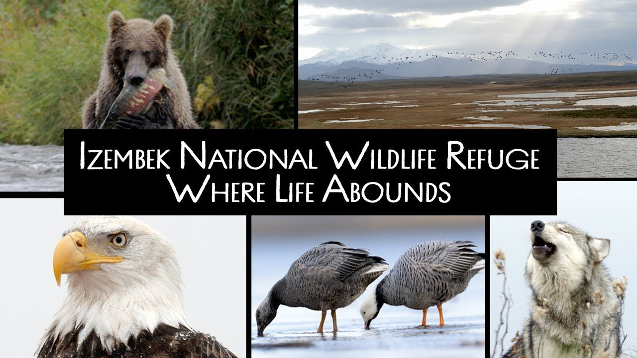 Izembek National Wildlife Refuge: Where Life Abounds (Visitor Center)