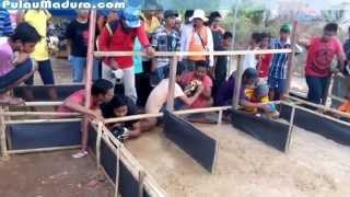 Video Kerapan Kelinci di Bangkalan Madura download MP3, 3GP, MP4, WEBM, AVI, FLV Mei 2018