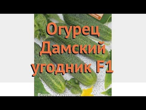 Огурец обыкновенный Дамский угодник F1 🌿 обзор: как сажать, семена огурца Дамский угодник F1