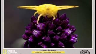 «АТВ Ставрополь» №2 | «National Geographic Россия» | «Gallery Parshin»