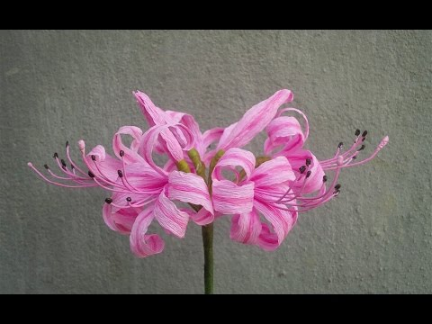 ABC TV | How To Make Nerine Lily Paper Flowers From Crepe Paper - Craft Tutorial