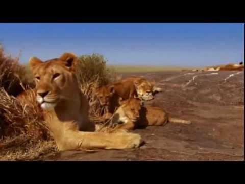 Serengeti National Park (Tanzania) - Life & Death in Savanna