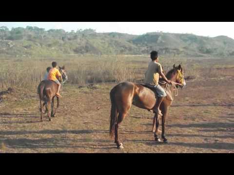 Balapan Liar Kuda Lokal NTT