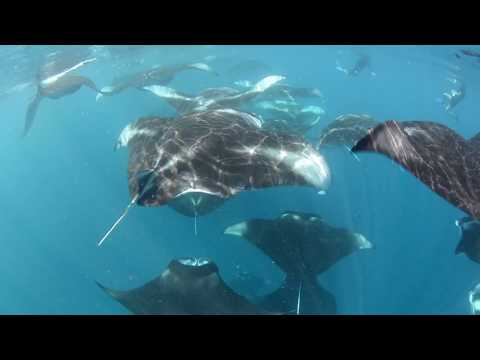 Thumbnail: How to Swim with Manta Rays: Behind the Scenes at Four Seasons Resorts Maldives