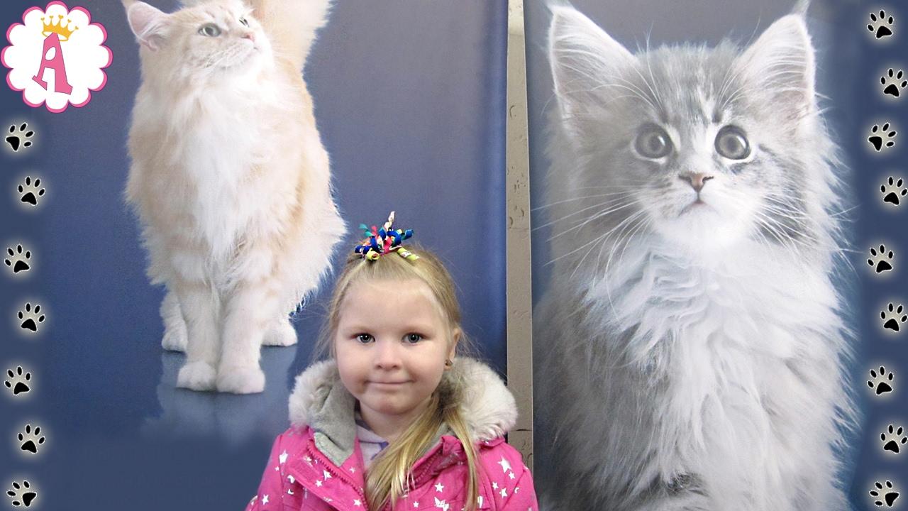 шотландские котята Харьков,Украина - YouTube